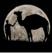A man walking with his camel in Van, Turkey, stops to observe the partial lunar eclipse on 7 August 2017. In two weeks' time, on 21 August, North America will be treated to a rare phenomenon - a solar eclipse. PHOTO: Ali Ihsan Ozturk-Anadolu Agency-Getty Images BBCSnapshot photography lunar moon eclipse: A man walking with his camel in Van, Turkey, stops to observe the partial lunar eclipse on 7 August 2017. In two weeks' time, on 21 August, North America will be treated to a rare phenomenon - a solar eclipse. PHOTO: Ali Ihsan Ozturk-Anadolu Agency-Getty Images BBCSnapshot photography lunar moon eclipse