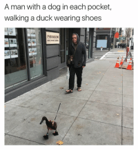 Funny, Paragon, and Pocket: A man with a dog in each pocket,  walking a duck wearing shoes  PARAGON I don't know who this man is, but he's exactly the hero America needs right now. (via Reddit user iHaeTypos)