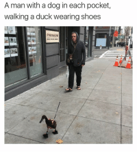 Not something you see everyday... 😂 (Reddit-ihaetypos): A man with a dog in each pocket,  walking a duck wearing shoes  PARAGON Not something you see everyday... 😂 (Reddit-ihaetypos)