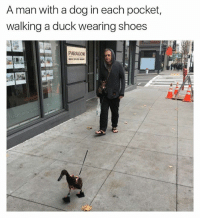 paragon: A man with a dog in each pocket,  walking a duck wearing shoes  PARAGON