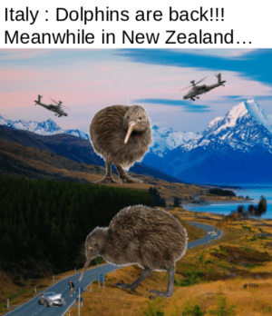 A meme for the all the Kiwis in the audience:: A meme for the all the Kiwis in the audience: