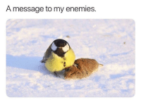 Enemies, Dear, and  Message: A message to my enemies. Dear jerks