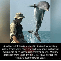 Memes, Dolphin, and Dolphins: A military dolphin is a dolphin trained for military  uses. They have been trained to rescue lost naval  swimmers or to locate underwater mines. Military  dolphins were used by the U.S. Navy during the  First and Second Gulf Wars  com/actsweird