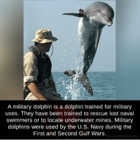 Memes, Dolphin, and Dolphins: A military dolphin is a dolphin trained for military  uses. They have been trained to rescue lost naval  swimmers or to locate underwater mines. Military  dolphins were used by the U.S. Navy during the  First and Second Gulf Wars  fb.com/facts weird