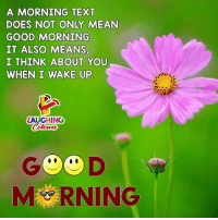 morning: A MORNING TEXT  DOES NOT ONLY MEAN  GOOD MORNING  IT ALSO MEANS  I THINK ABOUT YOU  WHEN I WAKE UP  LAUGHING  G D  MRNING