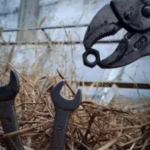 A mother plier feeding its wrenchlings.: A mother plier feeding its wrenchlings.