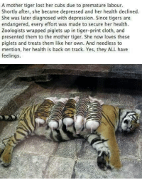 Memes, Cubs, and 🤖: A mother tiger lost her cubs due to premature labour  Shortly after, she became depressed and her health declined.  She was later diagnosed with depression. Since tigers are  endangered, every effort was made to secure her health.  Zoologists wrapped piglets up in tiger-print cloth, and  presented them to the mother tiger. She now loves these  piglets and treats them like her own. And needless to  mention, her health is back on track. Yes, they ALL have  feelings. Animals have feelings too.