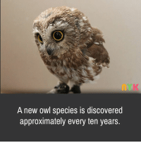 owl: A new owl species is discovered  approximately every ten years.