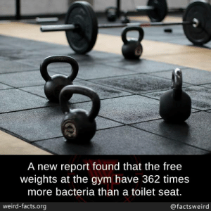weights: A new report found that the free  weights at the gym have 362 times  more bacteria than a toilet seat.  weird-facts.org  @factsweird