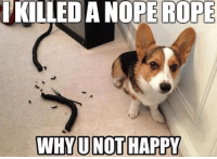 Nope: A NOPE ROPE  ROPE  WHY U NOT HAPPY