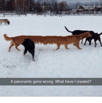 Memes, 🤖, and Gone: A panoramic gone wrong. What have I created? L O N G D O G G O