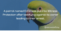 https://t.co/8BBfvYjxNu: A parrot named Echo was put into Witness  Protection after testifying against its owner  leading to their arrest.  @iearnsomething https://t.co/8BBfvYjxNu