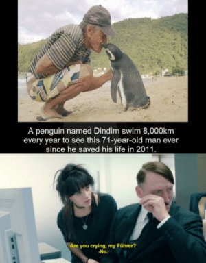 Everyone liked that: A penguin named Dindim swim 8,000km  every year to see this 71-year-old man ever  since he saved his life in 2011.  Are you crying, my Führer?  -No. Everyone liked that