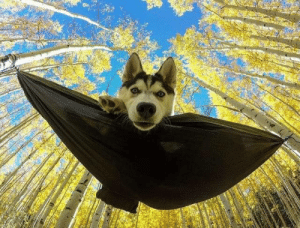 A perfect shot. Bat-dog :) (via): A perfect shot. Bat-dog :) (via)