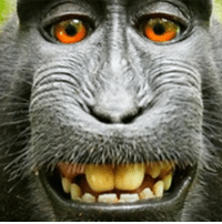 "A photographer has settled a two-year legal fight against an animal rights group over a ""monkey selfie"" picture. The macaque took the image in the Indonesian jungle in 2011 when it picked up David Slater's camera. US judges had said copyright protection could not be applied to the monkey but Peta said the animal should benefit. Peta's appeal on the ""monkey's behalf"" was dismissed, but Mr Slater has agreed to donate 25% of any future revenue to wildlife charities. 📷Wildlife Personalities-David J Slater monkey monkeyselfie selfie animals animalsofinstagram peta: A photographer has settled a two-year legal fight against an animal rights group over a ""monkey selfie"" picture. The macaque took the image in the Indonesian jungle in 2011 when it picked up David Slater's camera. US judges had said copyright protection could not be applied to the monkey but Peta said the animal should benefit. Peta's appeal on the ""monkey's behalf"" was dismissed, but Mr Slater has agreed to donate 25% of any future revenue to wildlife charities. 📷Wildlife Personalities-David J Slater monkey monkeyselfie selfie animals animalsofinstagram peta"