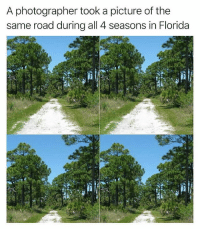 Florida, No Lie, and A Picture: A photographer took a picture of the  same road during all 4 seasons in Florida no lie