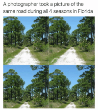 Funny, Florida, and Trees: A photographer took a picture of the  same road during all 4 seasons in Florida If you look closely, you can see the trees sweating