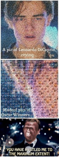 Poor Leo :(: A pic of Leonardo DiCaprio,  Made of  Oscar winners  YOU HAVE RUSTLED ME TO  THE MAXIMUM EXTENT! Poor Leo :(