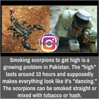 "Memes, Pakistan, and Scorpion: a  Point  Smoking scorpions to get high is a  growing problem in Pakistan. The ""high""  lasts around 10 hours and supposedly  makes everything look like it's ""dancing.""  The scorpions can be smoked straight or  mixed with tobacco or hash. did you know fact point , education amazing dyk unknown facts daily facts💯 didyouknow follow follow4follow f4f factpoint instafact awesome world worldfacts like like4ike tag friends Don't forget to tag your friends 🤘"