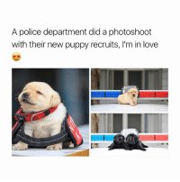 Aww, Love, and Police: A police department did a photoshoot  with their new puppy recruits, I'm in love AWW