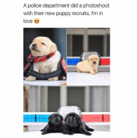 Animals, Cute, and Cute Animals: A police department did a photoshoot  with their new puppy recruits, I'm in  love SWIPE & TAG ❤️ follow me @v.cute.animals 👈👈