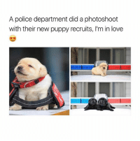 Just look at how cute they are 😍: A police department did a photoshoot  with their new puppy recruits, I'm in love Just look at how cute they are 😍