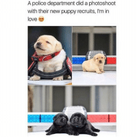 Follow my other accounts @antisocialtv @lola_the_ladypug @x__antisocial_butterfly__x ❤️: A police department did a photoshoot  with their new puppy recruits, I'm in  love Follow my other accounts @antisocialtv @lola_the_ladypug @x__antisocial_butterfly__x ❤️