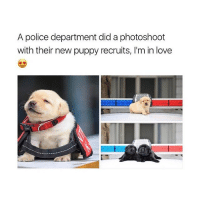 this makes me smile 😁: A police department did a photoshoot  with their new puppy recruits, I'm in love this makes me smile 😁