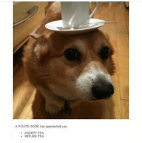 Doge, Memes, and 🤖: A POLITE DOGE has approached you  ACCEPT TEA  REFUSE TEA A C C E P T - Max textpost textposts