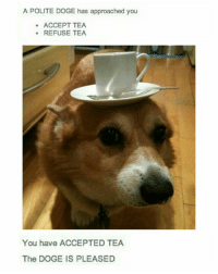 Doge, Memes, and Accepted: A POLITE DOGE has approached you  ACCEPT TEA  REFUSE TEA  You have ACCEPTED TEA  The DOGE IS PLEASED sphincter refuses tea (follow me @chaos.reigns_ ☕)