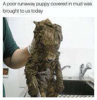 Memes, Puppy, and Today: A poor runaway puppy covered in mud was  brought to us today This was the most wholesome thing in 2017 SWIPE ⬅️ | 👉 @betasalmon for more