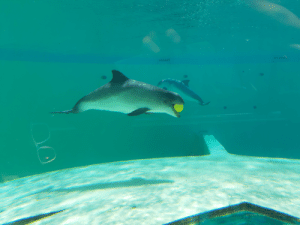 A porpoise playing with his ball: A porpoise playing with his ball