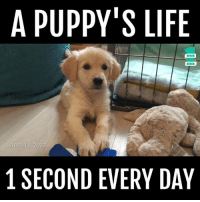 Life, Omg, and Humans of Tumblr: A PUPPY'S LIFE  APR 14 2017  1 SECOND EVERY DA YOU GUYS, OMG 🐕 🐕 🐕 (made w/ the 1 Second Everyday app)