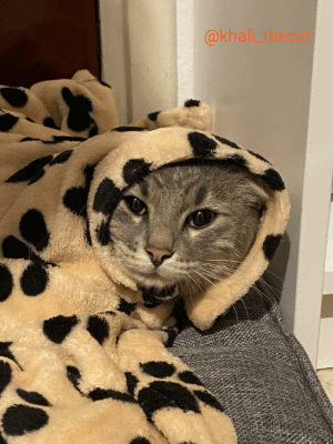 A purrito for the cold nights 😂😂: A purrito for the cold nights 😂😂