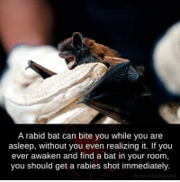 Rabied: A rabid bat can bite you while you are  asleep, without you even realizing it. If you  ever awaken and find a bat in your room,  you should get a rabies shot immediately.  fb.com/factsweird
