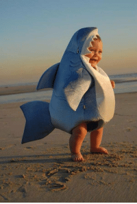 Baby, It's Cold Outside, Shark, and Sharks: a rare baby great white shark