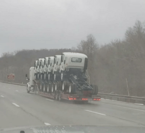 A rare glimpse of a mother truck and her trucklings in the wild: A rare glimpse of a mother truck and her trucklings in the wild