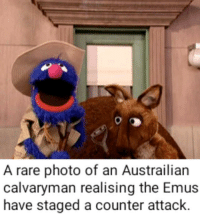 Bertstrips, War, and Emu: A rare photo of an Austrailian  calvaryman realising the Emus  have staged a counter attack.