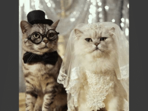 A real Marriage Story (staring two cats) ..: A real Marriage Story (staring two cats) ..
