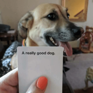 Good, Dog, and This: A really good dog. My dog just brought me this CAH card from downstairs