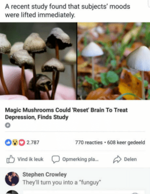 """Stephen, Best, and Brain: A recent study found that subjects' moods  were lifted immediately.  Magic Mushrooms Could 'Reset Brain To Treat  Depression, Finds Study  80 2.787  770 reacties 608 keer gedeeld  Vind ik leuk  Opmerking pla...  Stephen Crowley  They'll turn you into a """"funguy"""" Best commend"""