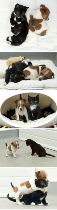 Cats, Dogs, and Target: A Rejected Puppy And An Abandoned Kitten Adopt EachOther.Buttons the puppy was the runt of the litter and was rejected by her mother, but atBattersea Cats and Dogs Home, he found someone who loves him unconditionally: Kitty the kitten.The two were placed together as infants and are now inseparable.