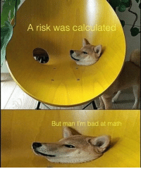 meme memer memes anime dogs god autism funny comedy edgy: A risk was calculated  But man I'm bad at math meme memer memes anime dogs god autism funny comedy edgy