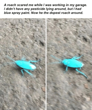 I utilized what I had at hand: A roach scared me while I was working in my garage.  / didn't have any pesticide lying around, but I had  blue spray paint. Now he the dopest roach around I utilized what I had at hand