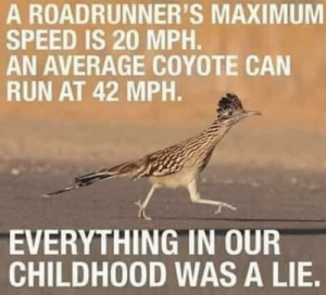 Meep meep: A ROADRUNNER'S MAXIMUM  SPEED IS 20 MPH.  AN AVERAGE COYOTE CAN  RUN AT 42 MPH.  EVERYTHING IN OUR  CHILDHOOD WAS A LIE. Meep meep