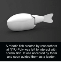 Memes, Soon..., and Fish: A robotic fish created by researchers  at NYU-Poly was left to interact with  normal fish. It was accepted by them  and soon guided them as a leader.