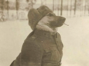 A Russian Officer taking a break after the liberation of Auschwitz (1945): A Russian Officer taking a break after the liberation of Auschwitz (1945)
