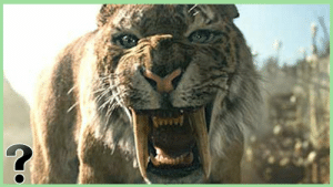 A sabre-toothed cat is any member of various living and extinct groups of predatory mammals that are characterized by long, curved sabre-shaped canine teeth which protruded from the mouth even when closed. The sabre-toothed cats became extinct almost 11000 years ago.: A sabre-toothed cat is any member of various living and extinct groups of predatory mammals that are characterized by long, curved sabre-shaped canine teeth which protruded from the mouth even when closed. The sabre-toothed cats became extinct almost 11000 years ago.