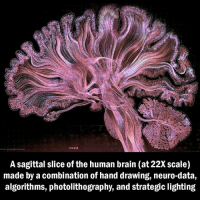 Memes, Videos, and Brain: A sagittal slice of the human brain (at 22Xscale)  made by a combination of hand drawing, neuro-data,  algorithms, photolithography, and strategic lighting For more visualizations and to learn more visit: http:-www.gregadunn.com-self-reflected-videos-
