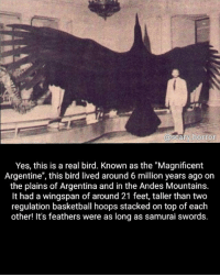 """Well damn: a SCar ahorror  Yes, this is a real bird. Known as the """"Magnificent  Argentine"""", this bird lived around 6 million years ago on  the plains of Argentina and in the Andes Mountains.  It had a wingspan of around 21 feet, taller than two  regulation basketball hoops stacked on top of each  other! It's feathers were as long as samurai swords. Well damn"""